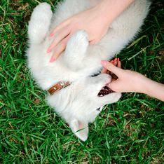 Sognare un cane che morde: significato e interpretazioni