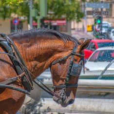 Un cheval tirant une calèche de touristes est mort d'épuisement, quelle honte !