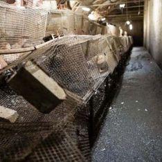 L214 : des images insoutenables du pire élevage que   l'association n'avait jamais vu auparavant