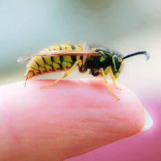 Wespenstich behandeln: 7 Hausmittel, die sofort helfen