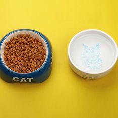 Katze trinkt nicht: Ab wann wird's gefährlich?