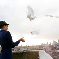Tauben vertreiben: Die besten Tipps & Tricks