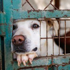 30 Millions d'Amis dévoile un film choc pour alerter sur l'abandon des animaux