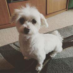 L'histoire émouvante de Lamb Chop, élue chienne de refuge la plus mignonne