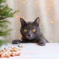 Katzen-Adventskalender 2020: Die besten Snacks für Stubentiger