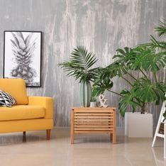 Piante verdi da appartamento: quali scegliere per arredare casa