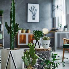 Piante grasse da interno: le 8 più belle per decorare casa