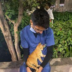 Coronavirus : ce chat qui réconforte un soignant va vous faire chaud au coeur