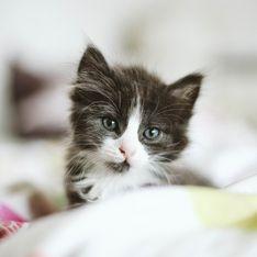 Des photos de chats pour dénoncer les crimes sexuels sur les enfants : l'appel de Child Focus sur les réseaux