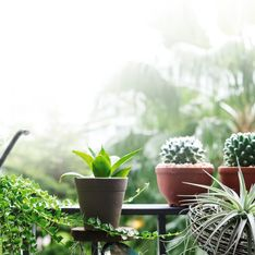 10 piante grasse da esterno sempreverdi, resistenti e facili da curare