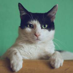 Test: che tipo di gatto sei in base alla tua personalitá?