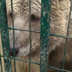 Deux ours enfin libérés du pire zoo du monde