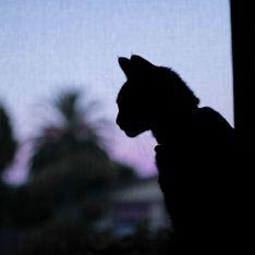 Rêver de chat, ça veut dire quoi ?