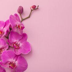 17. Hochzeitstag: Ausgefallene Ideen zur Orchideenhochzeit