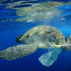 Écologie : Ces objets en plastique sont désormais interdits !
