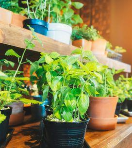 Potager d'intérieur : les meilleurs sites dédiés au jardinage urbain, le test et notre avis !