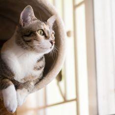 Animaux : 5 erreurs à éviter pour garder son chat en bonne santé