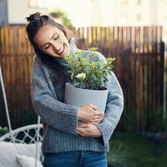 Piante da regalare: quali scegliere per omaggiare una persona speciale