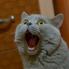 5 choses vraiment étranges que font les chats et dont voici enfin l'explication