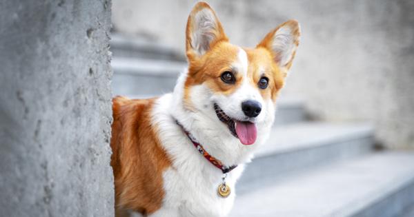 Hunde-Adoption-in-Corona-Zeiten-Viele-Tierheime-schlagen-jetzt-Alarm