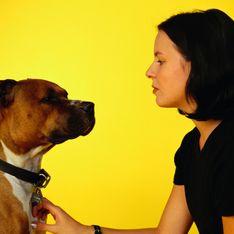 Étude : quelle race de chien est plus susceptible de mordre que les autres ?