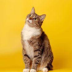 Elle retrouve 3 ans après sa disparition le chat qui l'a tant aidée