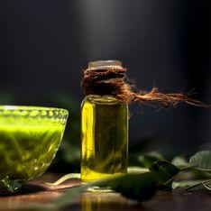 Olio di Neem per le piante: naturale ed efficace contro insetti e parassiti