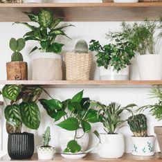 Piante sempreverdi: le migliori specie per decorare interni ed esterni di casa