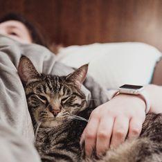 Coronavirus : le chat pourrait être le futur pangolin (si, si)