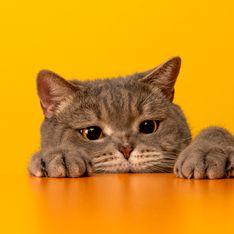 10 signes qui prouvent que votre chat vous aime sincèrement