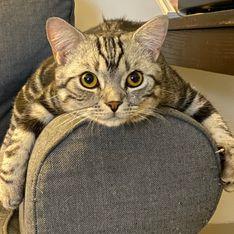 Acari gatto: un disturbo serio per il tuo amico a 4 zampe