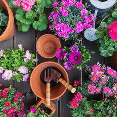Jardinage : quelles fleurs planter ce printemps ?