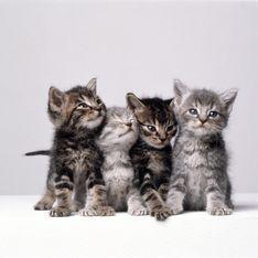 Sverminare gatto: quando è necessario ricorrere a un farmaco vermifugo per contrastare i parassiti intestinali del micio