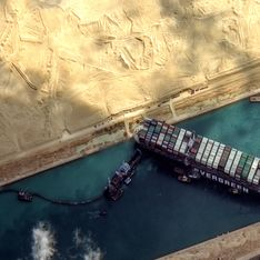 Canal de Suez : 130 000 moutons coincés dans des cargos et condamnés à l'agonie
