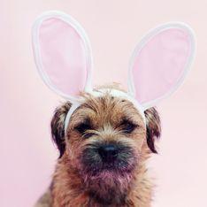 Pâques : pourquoi et à quelle dose le chocolat est-il dangereux pour votre chien ?