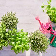 Voici les 7 erreurs les plus fréquentes à éviter avec vos plantes aromatiques