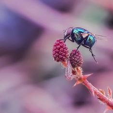 Anti-mouche naturel : les meilleures astuces pour se débarrasser des mouches