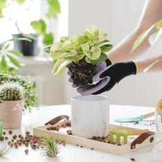 Rempotage des plantes : les 6 principales erreurs à ne plus commettre