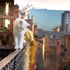 Syndrome du chat parachute : 5 astuces pour empêcher votre chat de tomber du balcon