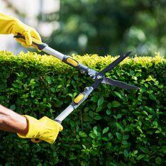 Piante da siepe: le sempreverdi migliori per il tuo giardino