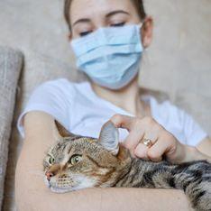Covid-19 : les animaux de compagnie, un réservoir viral ?