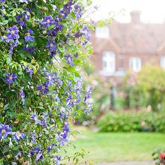 Piante perenni da giardino: i consigli su come coltivarle e prendersene cura
