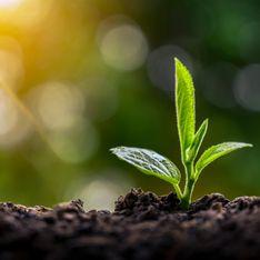 Engrais naturel : les meilleures recettes maison pour renforcer vos plantes