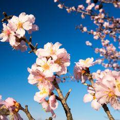 Fiori primaverili: tutte le piante facili da coltivare nella stagione più colorata