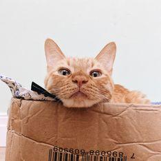 Mais pourquoi les chats adorent dormir dans des cartons ?