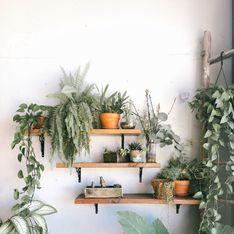 14 plantes tropicales faciles à entretenir pour chez soi