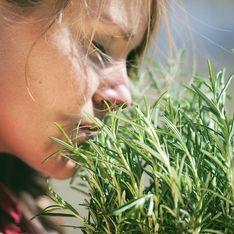 Infuso di rosmarino: le ricette con quest'erba aromatica molto preziosa che non può mancare nel tuo giardino