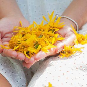 Arnica a cosa serve: dai suoi fiori il segreto per combattere le infiammazioni del nostro corpo