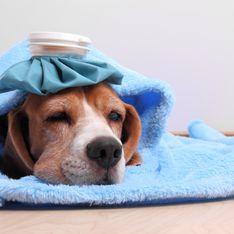 Come capire se il cane ha la febbre: quali sono i sintomi e come misurare la temperatura