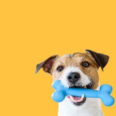 Hundespielzeug im Test: Das ist das Beste für euren Vierbeiner!